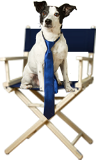 dogsonchair
